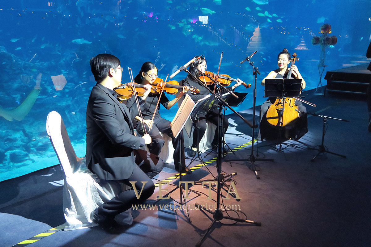 Live String Quartet Music for wedding at RWS SEA Aquarium